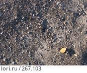 Берег, фото № 267103, снято 23 марта 2008 г. (c) Бяков Вячеслав / Фотобанк Лори