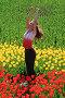Поле тюльпанов, фото № 271139, снято 23 апреля 2008 г. (c) Андрей Аркуша / Фотобанк Лори