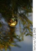 Купить «Шар на елке», фото № 272843, снято 15 января 2006 г. (c) Морозова Татьяна / Фотобанк Лори