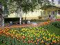 Тюльпаны весной у здания администрации Дмитровского района, фото № 273291, снято 5 мая 2008 г. (c) Ольга Смоленкова / Фотобанк Лори