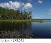 Купить «Новгородская область Ракитинское озеро», фото № 273515, снято 3 июля 2007 г. (c) Елена Александрова / Фотобанк Лори