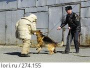 Купить «Уже куснула», фото № 274155, снято 16 апреля 2008 г. (c) Дмитрий Лемешко / Фотобанк Лори