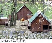 Купить «Дом на птичьих правах. Птичий дом.», фото № 274319, снято 2 мая 2008 г. (c) Надежда Глазова / Фотобанк Лори