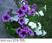 Купить «Цветок в горшочке», фото № 274795, снято 1 января 2003 г. (c) Юлия Дашкова / Фотобанк Лори