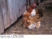 Купить «Сколько цыплят?», фото № 276935, снято 26 июня 2006 г. (c) Василий Козлов / Фотобанк Лори