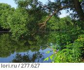 Купить «Тихий пруд», фото № 277627, снято 23 июня 2006 г. (c) Мурад / Фотобанк Лори