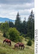 Купить «Кони на горном склоне», фото № 279655, снято 2 сентября 2007 г. (c) Юрий Брыкайло / Фотобанк Лори
