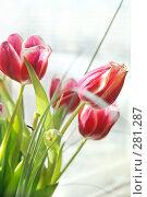 Купить «Весенние тюльпаны», фото № 281287, снято 10 марта 2008 г. (c) Вероника Галкина / Фотобанк Лори