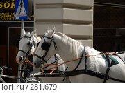 Купить «Лошади», фото № 281679, снято 6 мая 2008 г. (c) Лифанцева Елена / Фотобанк Лори