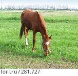 Купить «Одинокая лошадь», фото № 281727, снято 20 апреля 2008 г. (c) Олег Хархан / Фотобанк Лори