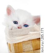 Купить «Котенок в корзине», фото № 285171, снято 26 марта 2007 г. (c) Андрей Армягов / Фотобанк Лори
