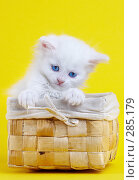 Купить «Котенок в корзине», фото № 285179, снято 28 марта 2007 г. (c) Андрей Армягов / Фотобанк Лори