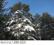 Купить «Зимний лес», фото № 286023, снято 24 февраля 2007 г. (c) Безрукова Ирина / Фотобанк Лори