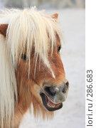 Купить «Пони», эксклюзивное фото № 286683, снято 26 апреля 2008 г. (c) Дмитрий Неумоин / Фотобанк Лори