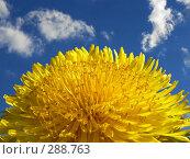 Купить «Одуванчик на фоне голубого неба», фото № 288763, снято 19 сентября 2019 г. (c) Владимир Сергеев / Фотобанк Лори