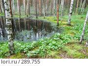 Купить «Болото в лесу», фото № 289755, снято 30 июня 2007 г. (c) Сергей Сынтин / Фотобанк Лори