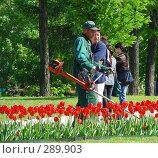Купить «Рабочий косит траву», эксклюзивное фото № 289903, снято 8 мая 2008 г. (c) lana1501 / Фотобанк Лори