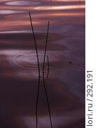 Купить «Абстракции на воде», фото № 292191, снято 18 сентября 2018 г. (c) Андрей Пашкевич / Фотобанк Лори