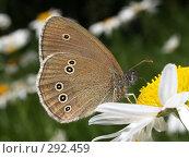 Купить «Бабочка на цветке», фото № 292459, снято 23 июня 2007 г. (c) Андрей Голубев / Фотобанк Лори