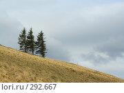 Купить «Три сосны на склоне», фото № 292667, снято 19 апреля 2008 г. (c) Юрий Гник / Фотобанк Лори