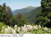 Купить «В горах Кавказа», фото № 292739, снято 6 июля 2007 г. (c) Татьяна Нафикова / Фотобанк Лори