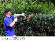 Купить «Садовник, подстригающий кусты», эксклюзивное фото № 292875, снято 24 апреля 2008 г. (c) Дмитрий Неумоин / Фотобанк Лори