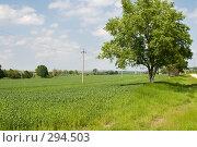 Купить «Зелёное поле озимой пшеницы», фото № 294503, снято 17 мая 2008 г. (c) Федор Королевский / Фотобанк Лори