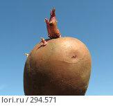 Картошка на фоне голубого неба. Стоковое фото, фотограф Олег Чумак / Фотобанк Лори