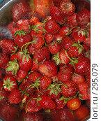 Купить «Клубника», фото № 295079, снято 18 июня 2007 г. (c) Примак Полина / Фотобанк Лори