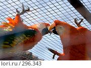 Купить «Красный ара», фото № 296343, снято 13 мая 2008 г. (c) Михаил Котов / Фотобанк Лори