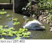 Купить «Пеликан», фото № 297403, снято 26 августа 2006 г. (c) Дмитрий / Фотобанк Лори