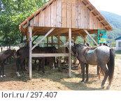 Купить «Лошадь», фото № 297407, снято 16 августа 2006 г. (c) Дмитрий / Фотобанк Лори