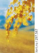 Ветви березы с желтыми листьями. Фотография, монокль. Стоковое фото, фотограф Гребенников Виталий / Фотобанк Лори