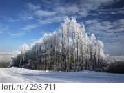 Купить «Заснеженный лес на фоне голубого неба», фото № 298711, снято 20 января 2008 г. (c) Сергей Сынтин / Фотобанк Лори