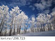 Купить «Деревья в инее на фоне голубого неба», фото № 298723, снято 20 января 2008 г. (c) Сергей Сынтин / Фотобанк Лори