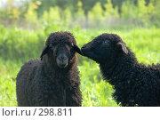 Купить «Овца с ягненком», фото № 298811, снято 2 мая 2008 г. (c) Артем Ефимов / Фотобанк Лори