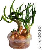 Купить «Лук зеленый, весенний», фото № 300203, снято 24 мая 2008 г. (c) Владислав Семенов / Фотобанк Лори