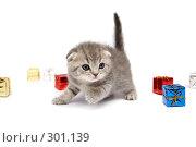 Купить «Котенок среди подарков», фото № 301139, снято 12 апреля 2008 г. (c) Cветлана Гладкова / Фотобанк Лори