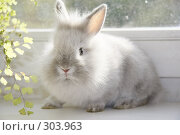 Карликовый кролик. Стоковое фото, фотограф Ольга Ковальчук / Фотобанк Лори