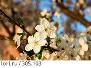 Купить «Цветущие сады», фото № 305103, снято 25 сентября 2018 г. (c) Куракевич Иван / Фотобанк Лори