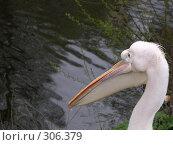 Купить «Пеликан», фото № 306379, снято 16 апреля 2008 г. (c) Бяков Вячеслав / Фотобанк Лори
