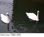 Купить «Лебеди», фото № 306395, снято 16 апреля 2008 г. (c) Бяков Вячеслав / Фотобанк Лори