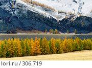 Купить «Осенний пейзаж в Горном Алтае», фото № 306719, снято 23 января 2018 г. (c) Гребенников Виталий / Фотобанк Лори