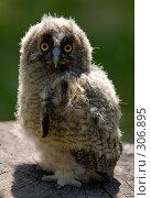 Купить «Птенец совы», фото № 306895, снято 8 июня 2007 г. (c) Виктор Филиппович Погонцев / Фотобанк Лори