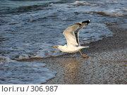 Купить «Чайка на берегу моря», фото № 306987, снято 1 июля 2006 г. (c) Gagara / Фотобанк Лори