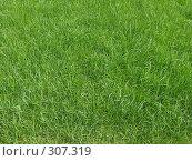 Купить «Зеленый газон», фото № 307319, снято 28 мая 2008 г. (c) Емельянов Валерий / Фотобанк Лори