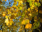 Осень, фото № 307759, снято 7 октября 2007 г. (c) Максим Пименов / Фотобанк Лори