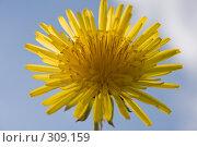 Купить «Одуванчик на фоне  неба», фото № 309159, снято 31 мая 2008 г. (c) Николай Коржов / Фотобанк Лори