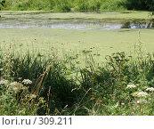 Купить «Заросшая река», фото № 309211, снято 2 августа 2006 г. (c) Дмитрий Кобзев / Фотобанк Лори