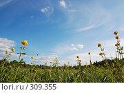 Купить «Зеленое поле с цветами на фоне голубого неба», фото № 309355, снято 31 мая 2008 г. (c) Катыкин Сергей / Фотобанк Лори